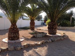Palmen im Vorgarten